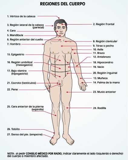 Cuerpo humano y sus partes en ingles - Imagui